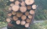less-forest_3.jpg